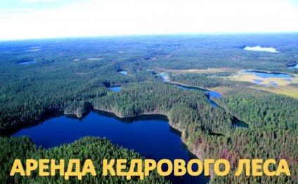 From НОВОСИБИРСК ЦЕНА
