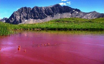 Малиновое озеро Алтайского