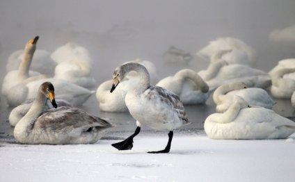 Лебединое озеро в Алтайском